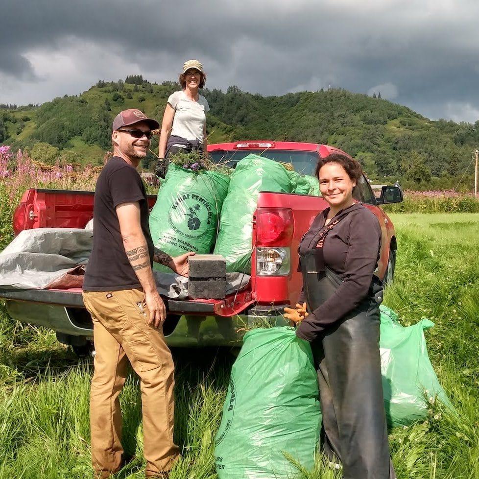 staff pull invasive bird vetch