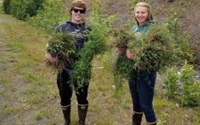 Join us for Community Weed-Pull Events this Summer!