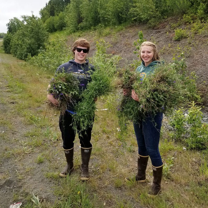 Two people pull invasive weeds.