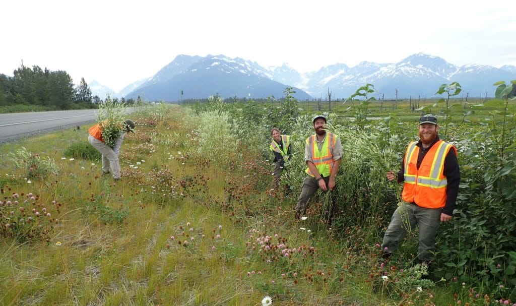 partners pull invasive plants along highway.